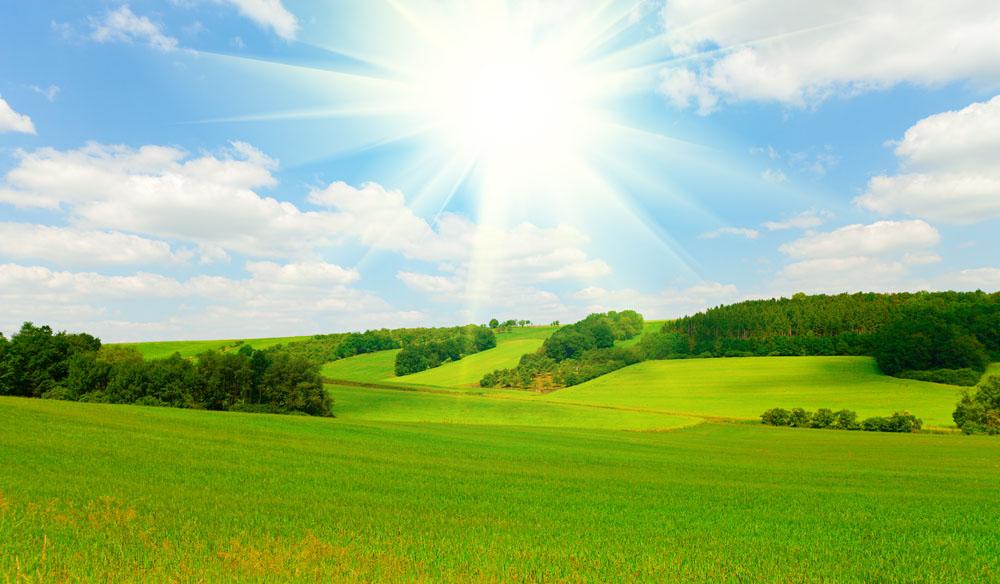 春天绿草地风景图片
