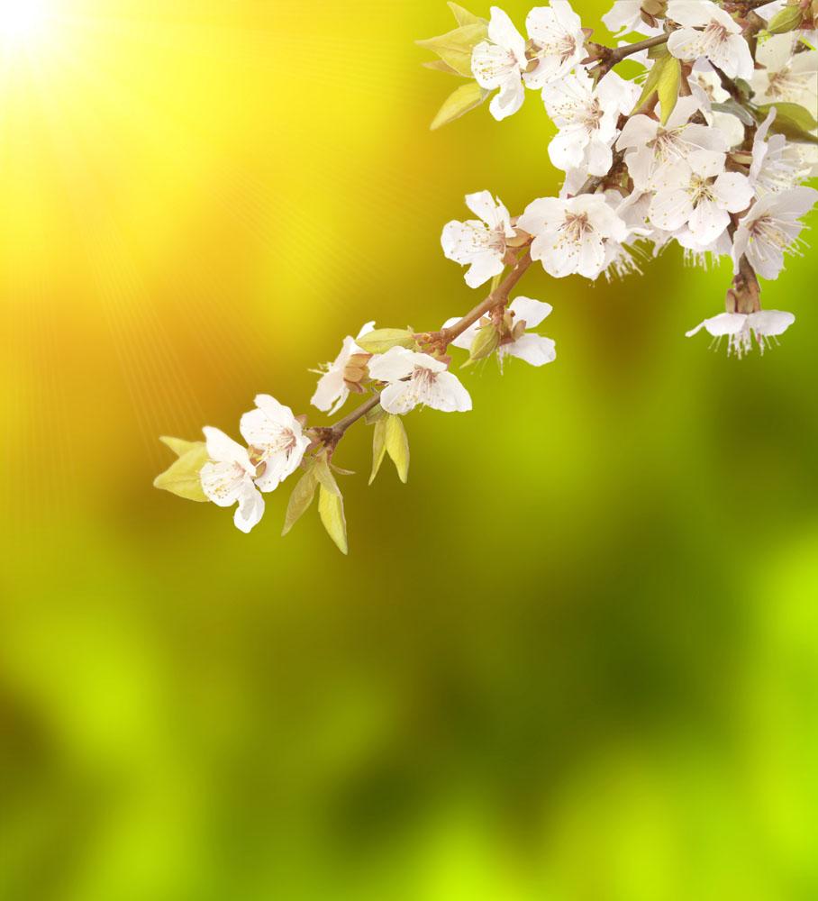 春天桃花实用背景图片