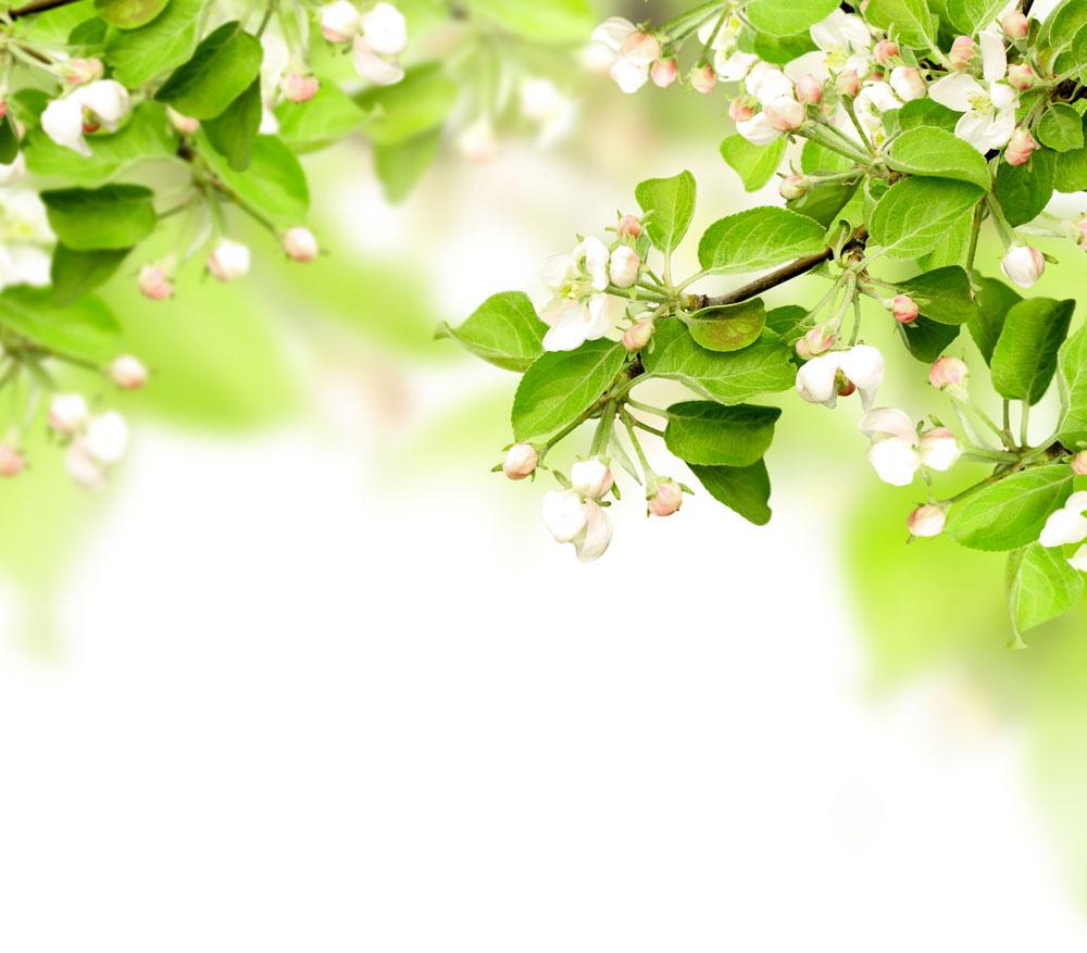 春天树枝花朵实用背景