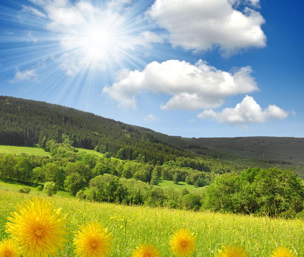 春暖花开风景图片