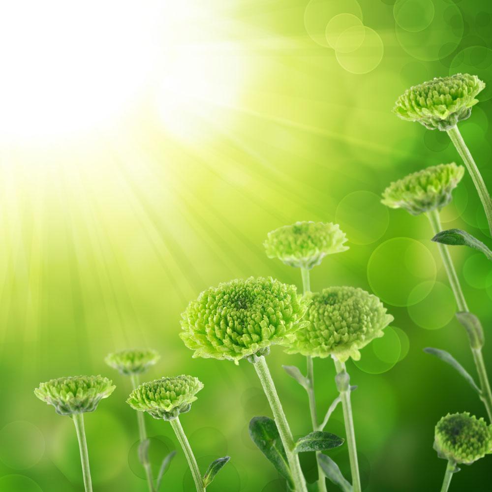 绿色环保底纹