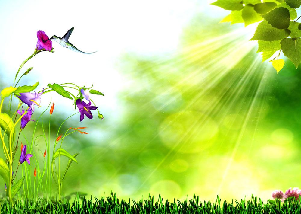 春天鲜花草地背景